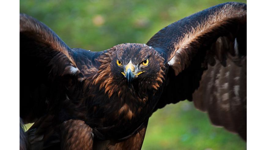 Adler-Erlebnis bei Giessen