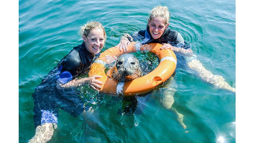 Schwimmen mit Robben in Rostock
