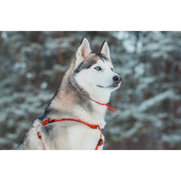 Nordic Husky Walking im Thueringer Wald