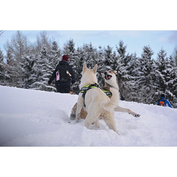 Schneeschuhwandern mit Wolfshunden in Bueren