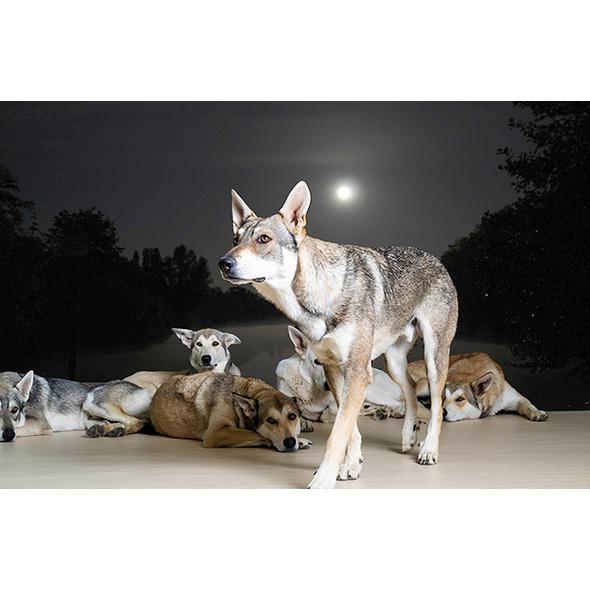 Wolfshunde Vollmondwanderung in Bueren (3 Stunden)