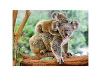 XXL-Puzzle Koalafamilie, 200 Teile